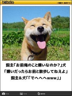 飼主「お前俺のこと嫌いなのか?」犬「嫌いだったらお前と散歩してねえよ」飼主&犬「「でへへへwww」」 Japanese Funny, Japanese Dogs, Illustrations And Posters, Shiba, I Love Dogs, Corgi, Funny Pictures, Jokes, Humor