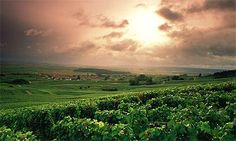 Champagne's rolling hills, cooler climate and chalky soil help maintain the acidity that helps Champagne age gracefully.