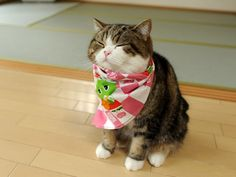 Maru is a male Scottish Fold cat in Japan who has become popular on YouTube. As of April 2013, videos with Maru have been viewed over 200 million times WATCH BEST OF MARU http://www.youtube.com/watch?v=WT3YGE5Cj0A