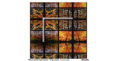 Add warmth and color to your home decor with this lovely autumn leaves and trees craft fabric.  I designed this fabric from a collage of photographs I took while hiking at the Joplin Missouri Audubon Nature Center.  The color of this fabric will compliment all autumn color schemes. Use this fabric for home decor projects.