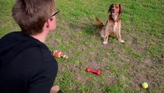 Do dogs really understand words or do they figure out what you're saying through visual & verbal cues?