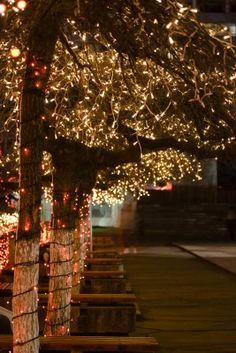 http://cygstarz.hubpages.com/hub/Stringing-Outdoor-Tree-Lights