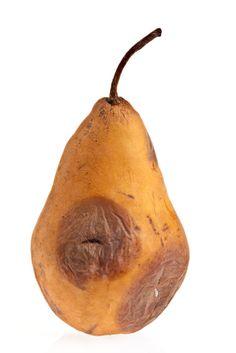 Rotten Pear | Insight for your innovation. Rotten Food, Rotten Fruit, Decay Art, Fruit Photography, A Level Art, Ap Art, Pumpkin, Artemis, Innovation