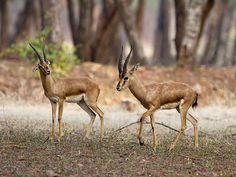 Kinnerasani Wildlife Sanctuary - in Khammam, Telangana, India