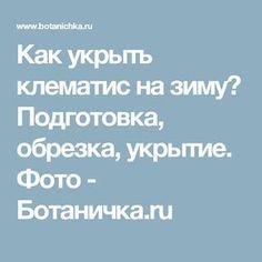 Как укрыть клематис на зиму? Подготовка, обрезка, укрытие. Фото - Ботаничка.ru