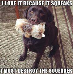 The squeak paradox.