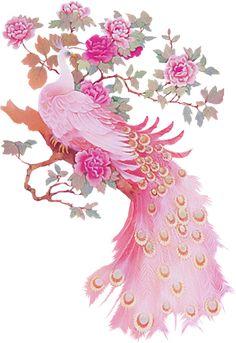 Resultado de imagem para pink peacock bird