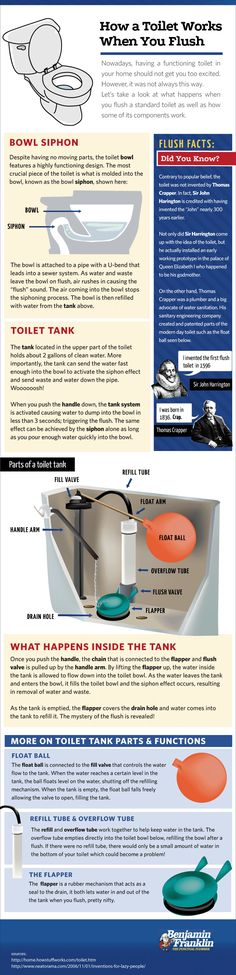 How Exactly Does a Toilet Work? Read This Infographic to Find Out!