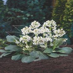 Interested in adding some low-growing white flowering plants to your garden? Here are 15 great suggestions! #gardening #flowers
