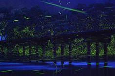 Natural Lights in Japan1