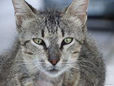 enas-periplanomenos-gatos