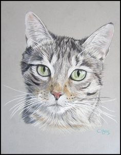 Chat au pastel sec par Cindy Barillet What's New Pussycat, Smart Art, Watercolor Cat, Color Pencil Art, All About Cats, Realistic Drawings, Cat Drawing, Animal Paintings, Dog Art