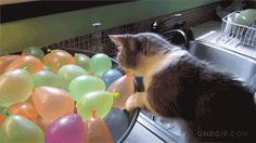 Top 30 cute moments: The legendary, unsolved mystery of the disappearing balloon, and the tenacious cat detective who refused to let the case go.
