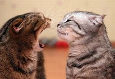CAN YOU HEAR ME NOW??? --- http://www.pinterest.com/jillinanderson/cats-and-kitties/