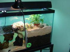 Separated Aquarium/Terrarium