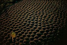 La Geria is a wine region on the island of Lanzarote, Spain. Vines grow in little circular gardens protected by the heat of volcanic stones.