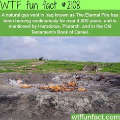 wtf fun facts - Google Search