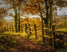 Footpath in Warnham, West Sussex. By Alan Fife