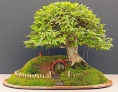 Casinha hobbit em bonsai.