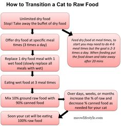Cat Nutrition Diet Step-by-step: transitioning cats to raw food. How to transition cats from dry food to wet and raw food. - Step-by-step: transitioning cats to raw food. How to transition cats from dry food to wet and raw food. Healthy Cat Food, Raw Pet Food, Raw Food Diet, Homemade Cat Food, Diy Food, Cat Diet, Cat Health, Raw Food Recipes, Food Tips