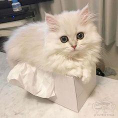 Alia's  kitty