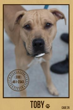 SEE SWEET BOY TOBY's VIDEO>>URGENT!!! PLEASE SPONSOR/RESCUE/ADOPT ASAP!!!! TOBY (sweet guy) FOUND IN CANTON, OHIO....... https://www.petfinder.com/petdetail/29736533/