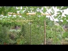 Шпалера для виноградника