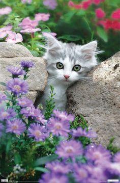 Pretty kitty  ******************************************