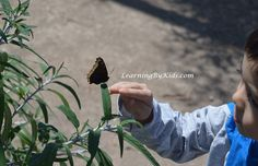 Visiting the Butterfly Farms | Learning By Kids | LearningByKids.com