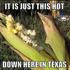 Yeah, this is how it is in Texas…LOL Stupid Funny Memes, Funny Relatable Memes, Funny Texts, Funny Stuff, Funny Things, Random Stuff, Funny Moments, Really Funny, Funny Cute
