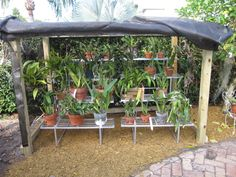 shadehouse for orchids