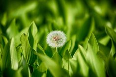 Dandelion Spores by UMzzang on 500px
