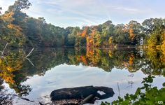 Fall Color 2015 #17
