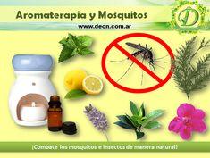 Cómo combatir los Mosquitos con Aromaterapia