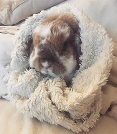 60 Funny Furry Animals To Brighten Your Day Cute Little Animals, Cute Funny Animals, Cute Bunny Pictures, Cute Baby Bunnies, Bunny Bunny, Bunny Care, Pet Rabbit, Rabbit Art, Cute Animal Videos