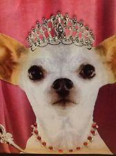 Queen Chihuahua