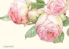 薔薇−2 Decoupage, Botanical Illustration, Illustration Art, Mini Roses, China Painting, Watercolor Rose, Illustrations, Beautiful Artwork, Clipart