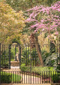 Garden Redbud, Charleston, SC