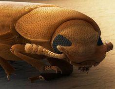 insectos y aracnidos bajo microscopio electronico