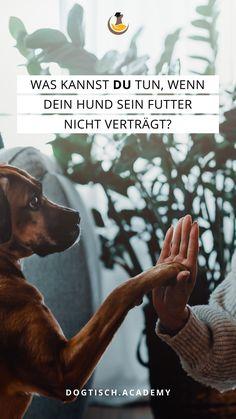 Wenn erkannt wurde, dass dein Hund an einer Futtermittelunverträglichkeit leidet, dann ist der erste Schritt schon getan. In unserem Blog erfährst du Wissenswertes, was DU selber im nächsten Schritt tun kannst. Irish Setter, West Highland White Terrier, Tricks, Blog, Movie Posters, Animal Clinic, Dog Owners, Vet Office, Red Setter Dog