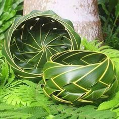 Hana Maui Online: Coconut Palm Woven Basket - woven from green fronds of the… Palm Tree Leaves, Palm Trees, Plant Leaves, Maui, Coconut Leaves, Coconut Bowl, Leaf Crafts, Palm Fronds, Leave In
