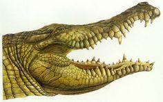 Croc Crocs, Animals, Animales, Animaux, Animal, Animais