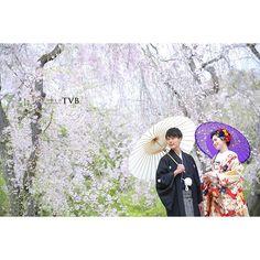 【studiotvbkyoto】さんのInstagramをピンしています。 《さくら スタジオTVB京都 Photographer:岩本由加(Y. I wamoto) #プレ花嫁 #前撮り #京都  #ウェディング #京都ウェディングフォト  #和装  #ロケーションフォト  #和装前撮り  #ロケーション #wedding #sakura #bridal photography #Kyoto  #KIMONO  #カメラマン #スタジオtvb #ヘアメイク  #Japan #location  #色打掛 #結婚 #結婚写真  #ナチュラル #自然 #d_weddingphoto #和装前撮り #紅葉#marriage #like#桜》