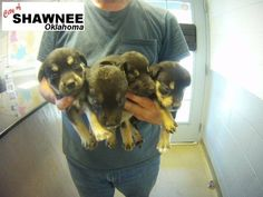 Shawnee, OK ★GAS CHAMBER SHELTER★ CRITICAL OWNER SURRENDER COULD BE GASSED AT ANYTIME! AVAILABLE NOW! ID # 150476 Mom with ★ 8 PUPPIES IN DANGER FAR TO YOUNG FOR SHELTER LIFE! ★ (See comments for photo of Mom) Once available the animals in this shelter have very little time to get out. PLEDGING ($$$s) helps rescues. FOSTER!! https://www.facebook.com/181162805272343/photos/a.862087780513172.1073741856.181162805272343/862702187118398/?type=1&comment_id=863781407010476