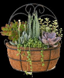 succulent dish garden ideas | ... succulent dish garden. Creating your own decorator garden has never