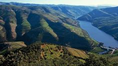 Portugal é o nono maior exportador de vinho