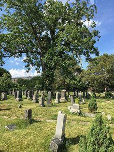 Visit: Harsimus Cemetary {Jersey City, New Jersey} Jersey City, New Jersey, Plants, Summer, Travel, Summer Time, Viajes, Destinations, Plant