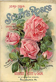 Company Name:  Robert Evans & Co.    Catalog Title:  Scott's Roses and Other Beautiful Flowers (1894)  Publication Information:  Philadelphia, PA  United States