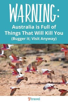 Do you want to visit Australia but are afraid of our deadly animals? Yes Australia is full of animals that will kill you, but the chances are so so slim. Heres how you can still travel to Australia and stay alive? #Australia #australiatravel #traveltips #travel