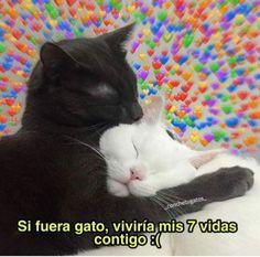 Cute Love Memes, Funny Love, Cartoon Memes, Funny Memes, Memes Amor, Memes Lindos, Pomes, Love Phrases, Cute Posts
